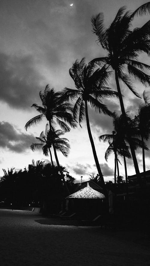 Foto profissional grátis de água, areia, árvore, baía