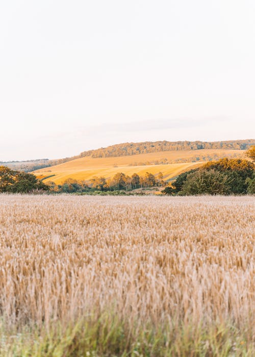 Základová fotografie zdarma na téma cereální, farma, hřiště, krajina