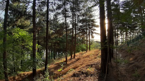 Free stock photo of #green, #nature, background, beautiful