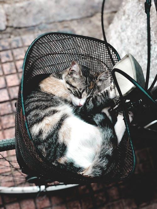 Безкоштовне стокове фото на тему «amoureux des chats, animaux, animaux à l'état sauvage»