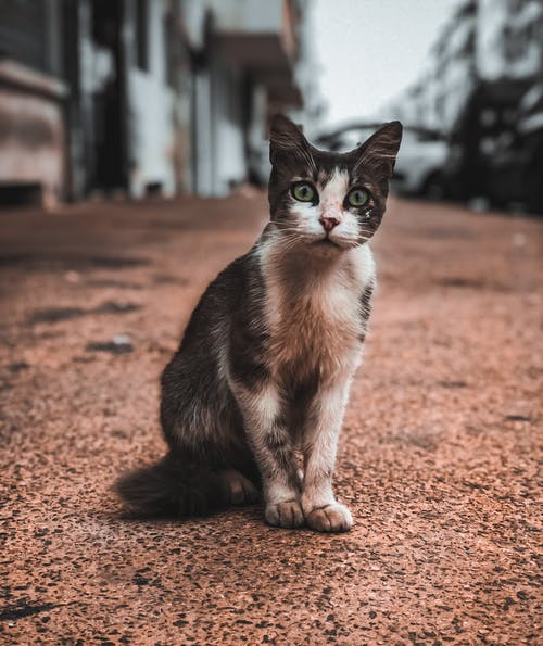 Бесплатное стоковое фото с amoureux des chats, animaux, animaux de compagnie