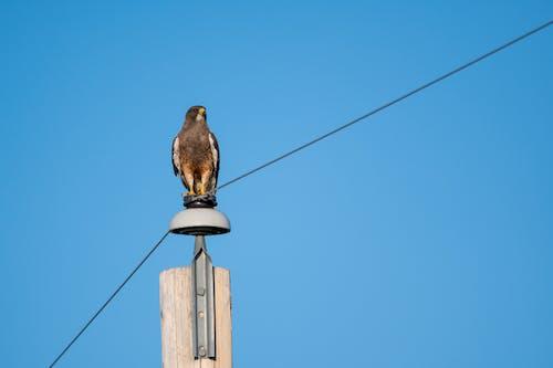 Brown Bird on Brown Wooden Cross Under Blue Sky