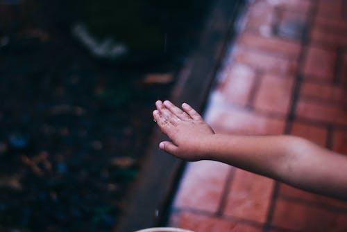 Free stock photo of early morning, hand, rain