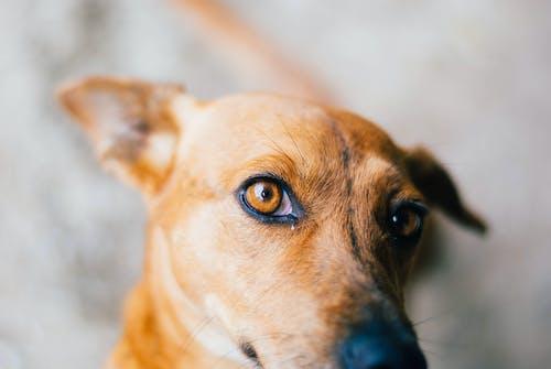 Free stock photo of bestfriend, cute, dog