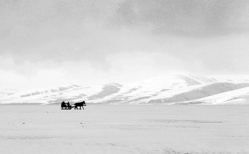 2 Horses on Snow Covered Field