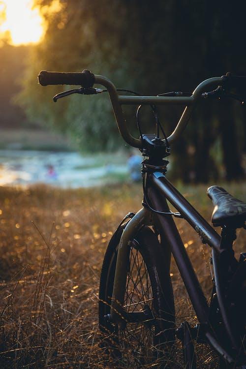 サイクリスト, さびた, バイカー, バイクの無料の写真素材