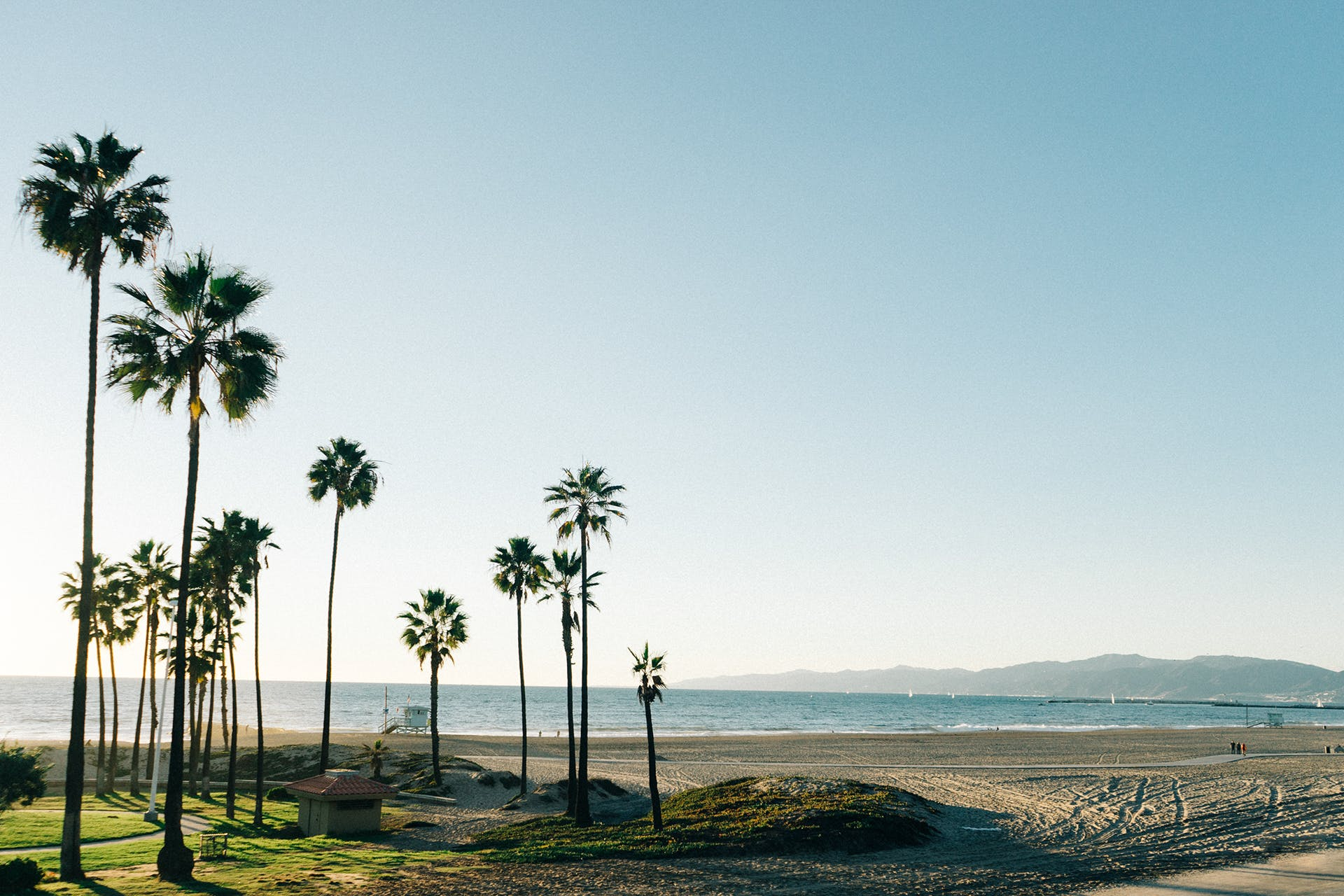beach, palms