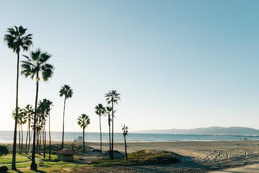Free stock photo of beach, palms