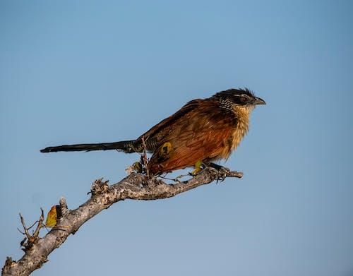 Gratis lagerfoto af fugl, Safari, vild fugl