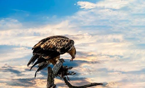 Gratis lagerfoto af rovfugl, Safari, vild fugl