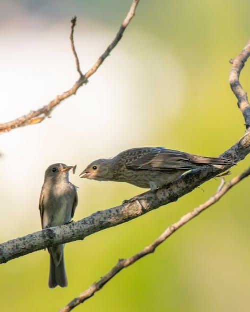 Безкоштовне стокове фото на тему «годування, птахи»