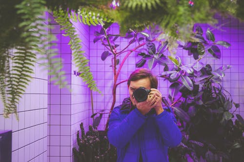 Free stock photo of camera, fern leaves, looking at mirror, mirror image