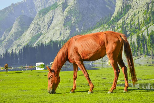 Free stock photo of brown horse, eating grapes, foggy mountain