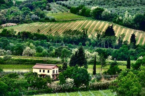 Fotos de stock gratuitas de agricultura, al aire libre, árbol, arquitectura