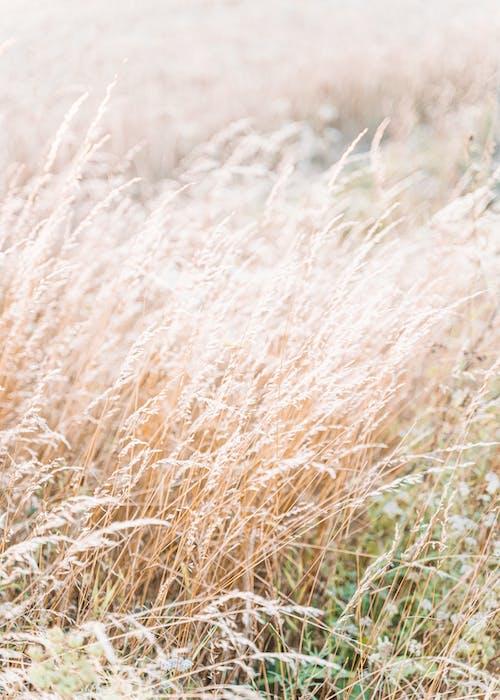 Základová fotografie zdarma na téma brčko, cereální, divoký, hřiště