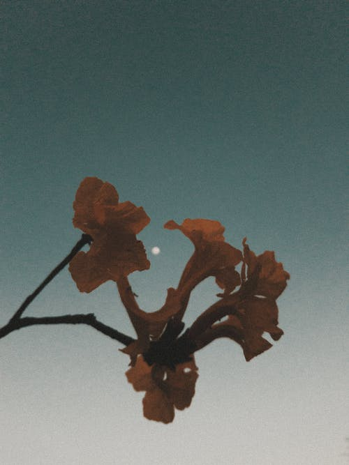 Photos gratuites de arbre, art, automne, bois