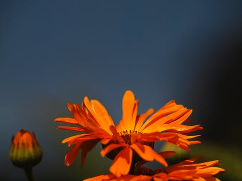 Free stock photo of #blume, #blumen, beautiful, blauen himmel
