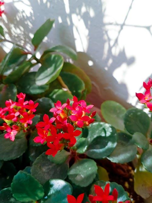Free stock photo of beautiful flower, beautiful nature, desktop background, desktop wallpaper