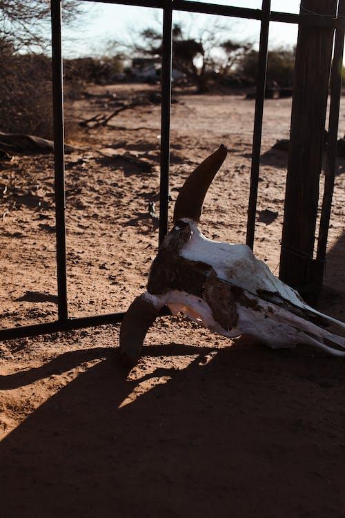 Dead animal skull on sandy land in sunlight
