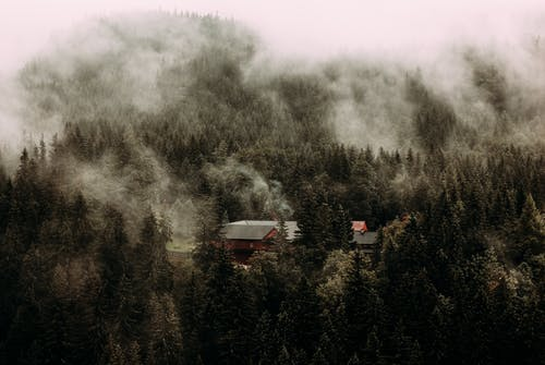 Wooden cottage located among dense forest with evergreen trees under gloomy misty sky