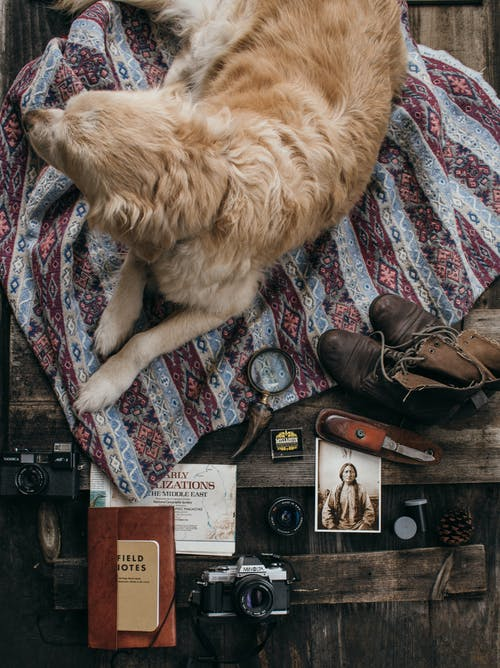 Foto stok gratis alat, anjing, atas
