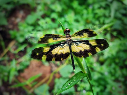 Free stock photo of butterfly, closeup, dragon fly, fly