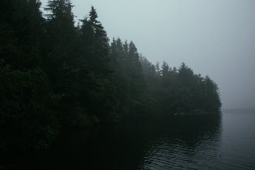 Dramatic view of mixed forest over calm surface of lake against gray gloomy sky with foggy horizon line