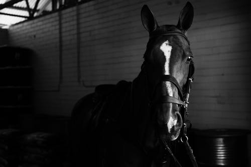 Horse with bridle standing in stable