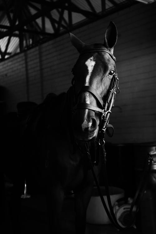 Purebred horse standing in stable in farm