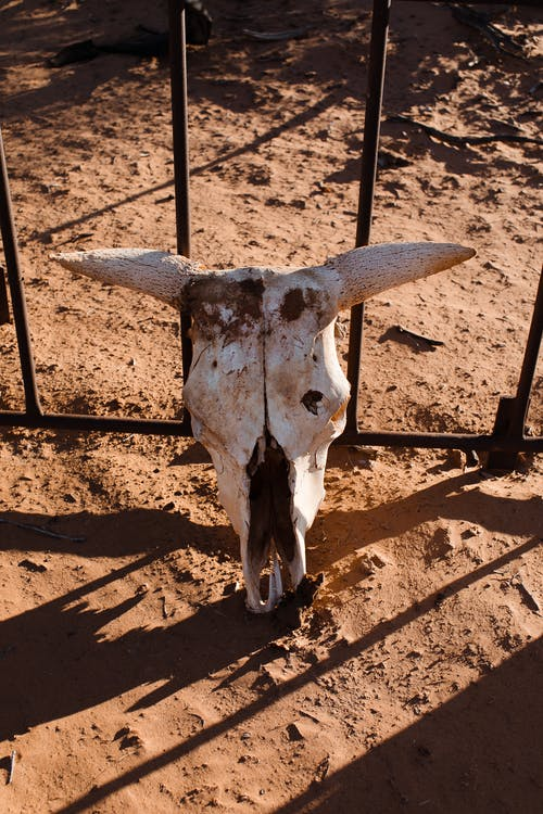 From above of decayed skull with horns of dead animal placed on sandy ground at metal fencing in sunny countryside