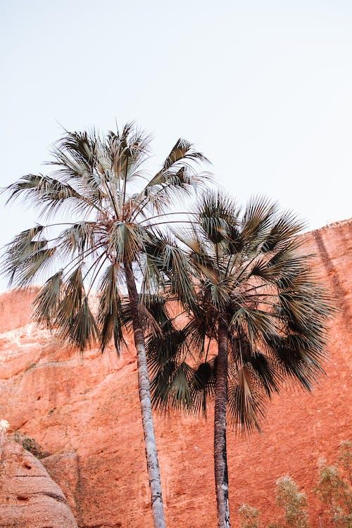 Exotic palms in mountainous area