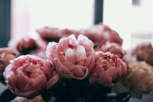 Bunch of fresh gentle pink peonies in vase