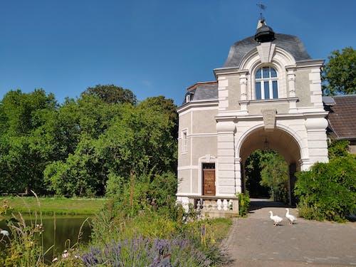 Free stock photo of park