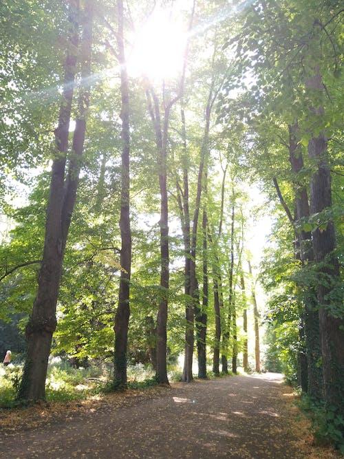 Free stock photo of #green, park, tree