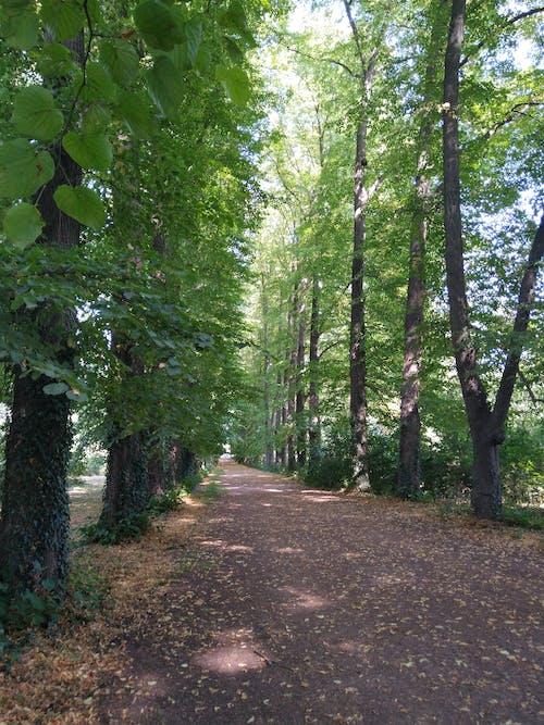 Free stock photo of #green, park, trees