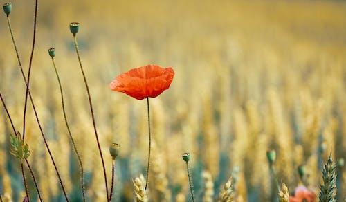 Základová fotografie zdarma na téma barva, flóra, hřiště, jasný