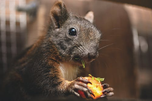 Imagine de stoc gratuită din a închide, adorabil, animal