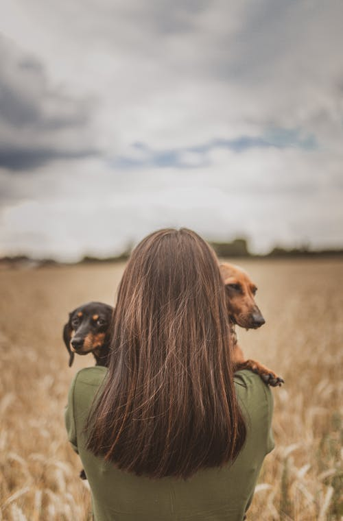 Back view of faceless young woman with long dark hair hugging Dachshund dogs while standing on grassy meadow in countryside against cloudy sky