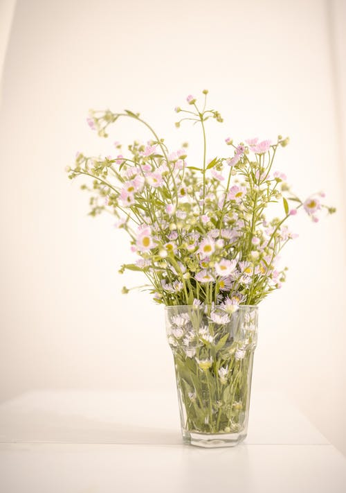 Simple glass vase with fresh delicate white doll s daisy flowers placed on white table