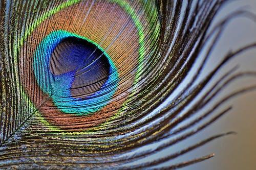 Základová fotografie zdarma na téma abstraktní, barva, design, divočina