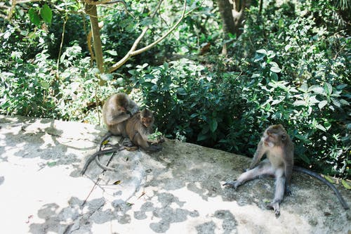 Gündüz Yeşilliklerin Gölgesinde Dinlenen Maymunlar
