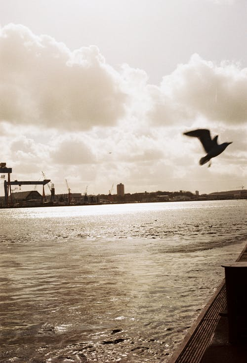 Free stock photo of analog, Hafen, ocean