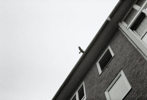 Free stock photo of monochrom, vogel