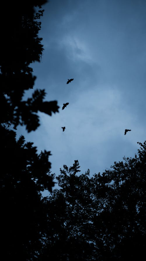 Birds Flying Under Cloudy Sky