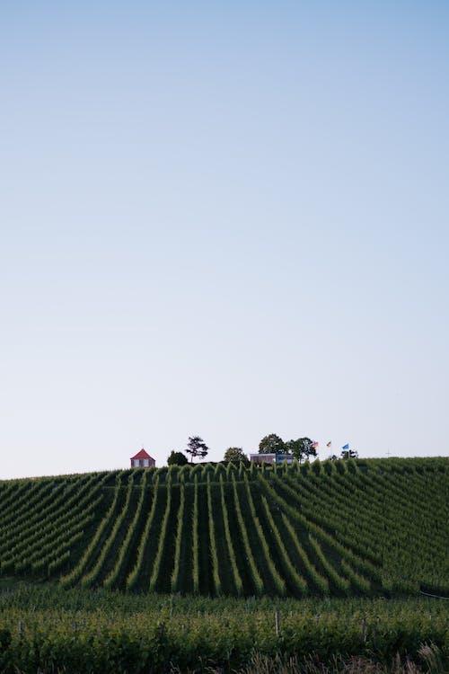 Gratis stockfoto met akkerland, blauwe lucht, bodem, boerderij