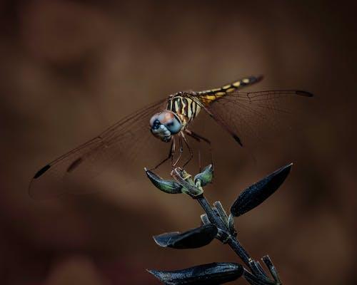 Imagine de stoc gratuită din afară, animale sălbatice, aripă
