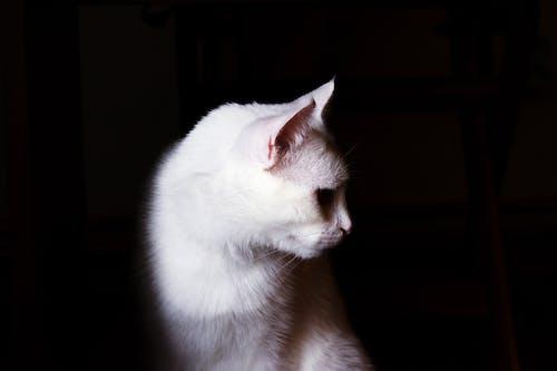 White Cat in Dark Room