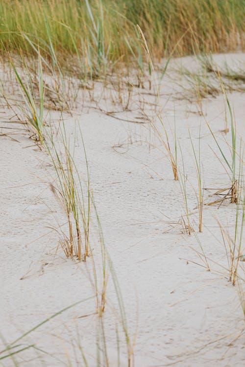 Immagine gratuita di acqua, bagnasciuga, duna, erba