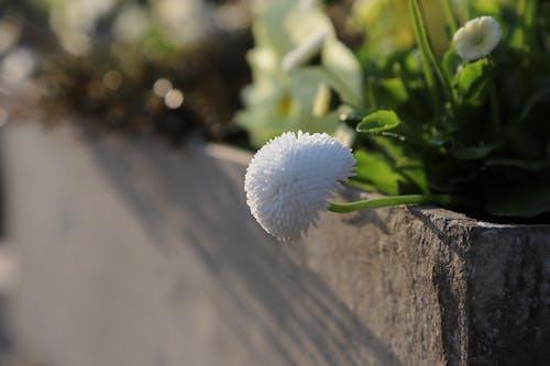 Free stock photo of blume, blumenhintergrund, desktop hintergrund