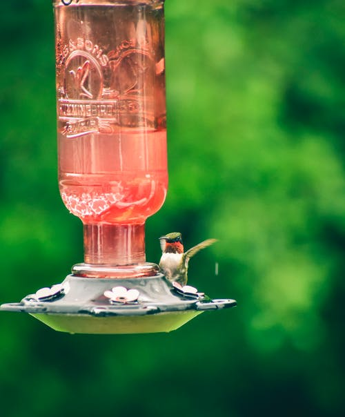 Tiny cute hummingbird flying near drinker with water on blurred background of bright green garden